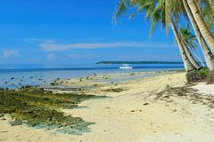 On the island of Siargao. Pacific Beach on the island of Siargao, Philippines Stock Image