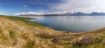 Island sommarlandskap. Fjord. royaltyfri bild