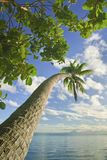 Island in south pacific Stock Image