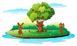 An island with three playful rabbits Royalty Free Stock Image