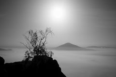 The island with tree. Full moon night in a beautiful mountain.  Sandstone rock peaks increased from ocean of foggy Royalty Free Stock Images