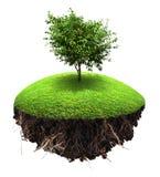 Island tree grass Stock Photography