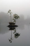 Island with trees in fog Stock Photo