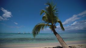 Island tropical beach with white sand, turquoise sea water and coconut palm trees. Punta Cana, Dominican Republic.  stock video