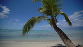 Island tropical beach with white sand, turquoise sea water and coconut palm trees. Punta Cana, Dominican Republic.  stock video footage