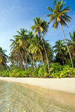 Island Tropical Shore. Shore of uncrowded tropical island of Ko Mak in Thailand Royalty Free Stock Photography