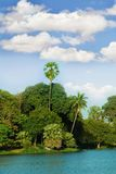 Island in tropics. Green island with palms in tropics Royalty Free Stock Photo
