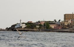 Ventotene. Island of Ventotene with seagull, seen from the sea, the lighthouse and the houses near the port. Pontine Islands stock photography
