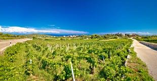 Island of Vis vineyards panorama Stock Photos
