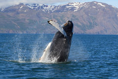 Island - Walerscheinen Stockbilder