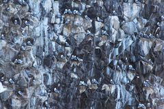 View of bird colony on the rock of Starichkov island by the Kamchatka Peninsula, Russia. stock photography