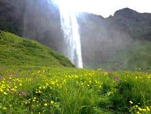 Island-Wasserfall Stockbild