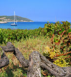 Island wineyard Stock Photo
