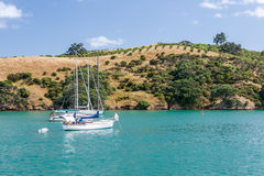 Island with yachts resting in a harbour. Waiheke Island, Auckland, New Zealand Royalty Free Stock Photos