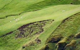 Islandese Hillside Immagini Stock Libere da Diritti
