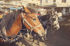 葡萄酒观点的马等待他们的轮在Islands王子 免版税图库摄影