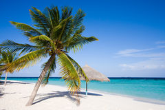 Islands. Beach. Palm. Stock Images