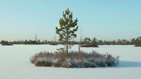 Islands of tree in the frozen lake. Clean and frosty daytime. Smooth dolly shot.  stock video