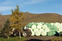 Islandzki gospodarstwo rolne Obraz Stock