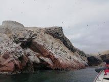 Islas Ballestas royalty-vrije stock foto