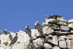 Islas Ballestas. Wildlife on Islas Ballestas in Peru Stock Images