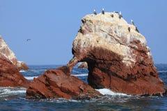 Islas Ballestas Stock Photos
