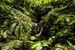 Islas Cook Imagenes de archivo