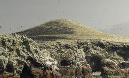 Islas de Ballestas, diciembre de 2016, Perú imagen de archivo