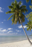 Islas de cocinero - paraíso tropical Fotos de archivo