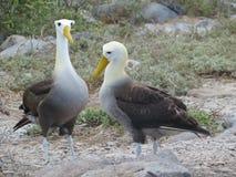 Islas de Galapgos Fotos de archivo
