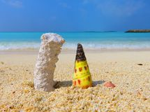 Islas de Maldivas: coral y cáscara Imágenes de archivo libres de regalías
