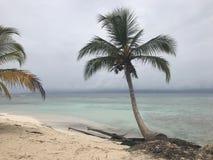 Islas de San Blass y playa de la palmera fotografía de archivo