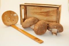 Islate гриба на белой предпосылке Стоковые Изображения