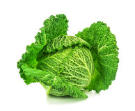Islated savoy cabbage Stock Photography