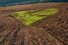 Grön hjärta av knoppninggräs som skapas av ploga, sätter in Royaltyfri Foto