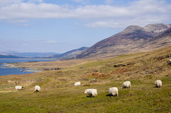 Isle of Mull landscape Royalty Free Stock Photo