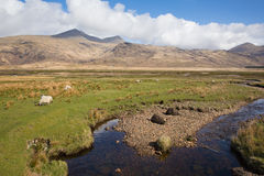 Isle of Mull Scotland UK rural countryside scene with view to Ben More and Glen More mountains Stock Image