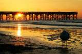 Isle of palms Royalty Free Stock Photo
