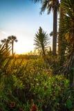 Isle Of Palms Sunrise Royalty Free Stock Photo