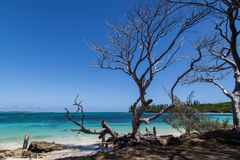 Isle of Pines New Caledonia. Tropical beach, Isle of Pines, New Caledonia Royalty Free Stock Image
