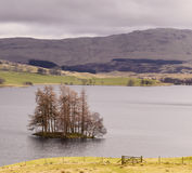 Isle of Trees in Scottish Loch Freuchie Stock Photo