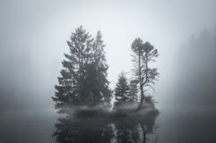 Isle of Trees Separated by Mist Royalty Free Stock Photo