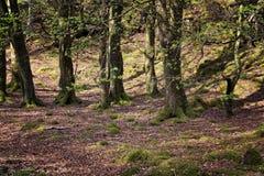 Isle of Ulva, undergrowth Stock Photography