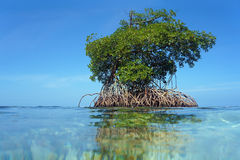 Islet of mangrove with blue sky. View from water surface, an islet of mangrove with blue sky in background, Bocas del Toro,Caribbean sea, Panama stock photos