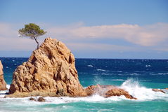 Islet over rough sea. Small islet with a pine tree over a rough sea Stock Image