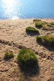 Islets lawn on the beach at the lake. Background Royalty Free Stock Photo