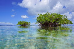 Islets of mangrove trees viewed from sea surface Stock Images