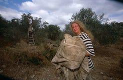 ISM ställa upp som frivillig i en olivgrön dunge, Palestina royaltyfria bilder