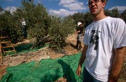 ISM ställa upp som frivillig i en olivgrön dunge, Palestina fotografering för bildbyråer
