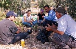 ISM ställa upp som frivillig ta en stöt en olivgrön dunge. royaltyfri bild